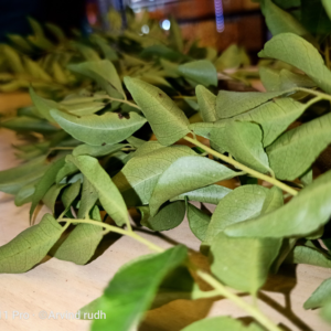 Curry Leaves | 20g